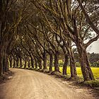 An avenue of trees by Art Hakker Photography