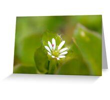 Surprise Garden Flower Greeting Card