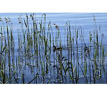 The beauty of the wild nature Photographic Print