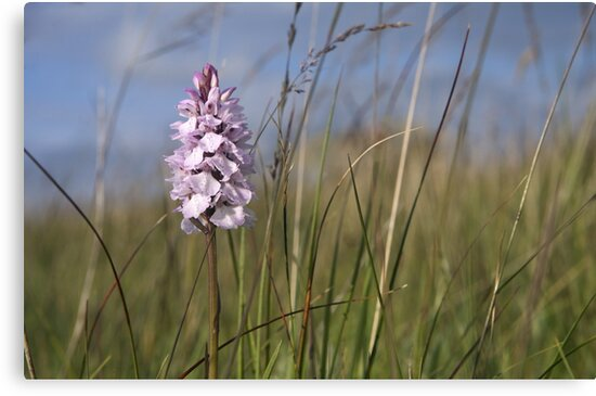 Spotted Orchid,  Portnoo, Co. Donegal by George Row