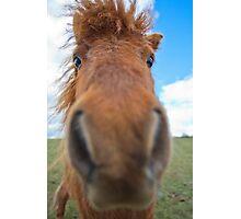 Shetland Pony Says Hi Photographic Print