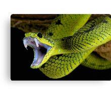 Fangs Green Snake Canvas Print