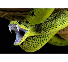 Fangs Green Snake Photographic Print