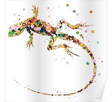 Rainbow Lizard  Poster