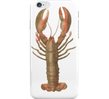 New England Watercolor Lobster Collection iPhone Case/Skin
