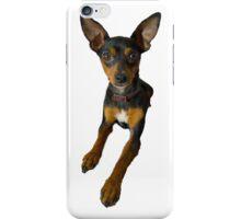 Conchita - a small doberman pincher like species of dog iPhone Case/Skin