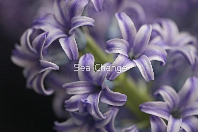 Beauty in Blue by Sea-Change