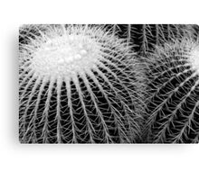 Cactus Spines in Black and White Canvas Print