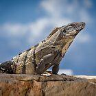 Iguana Sky by Ken Fleming
