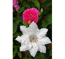 Rose & Clematis Photographic Print