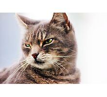 green eyed cat Photographic Print