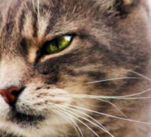 green eyed cat Sticker