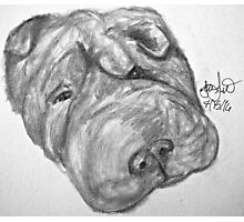 Whirley the dog Photographic Print