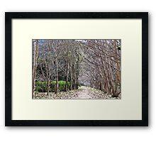 HC0206 Framed Print