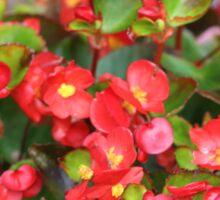 Red Flowers Bloom Sticker