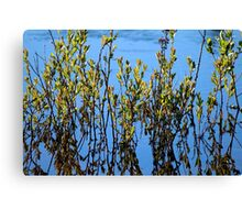 Bearberry and Its Reflection in a Beach Swale Canvas Print