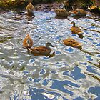 Spirit Energy of Ducks by shoffman