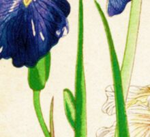 Blue Iris, Japanese Watercolor Sticker