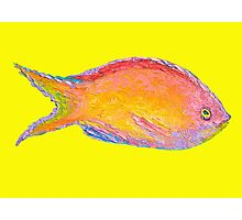Tropical fish on yellow background Photographic Print