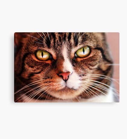 Close up of Cat Canvas Print