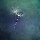 Dancing with the Wind by Priska Wettstein