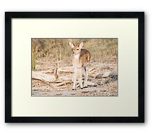 Looking for Mom Framed Print
