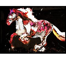 Painted Irish Gypsy Horse Photographic Print