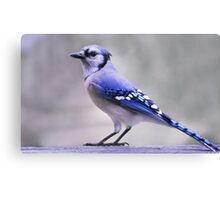Blue Jay Day Canvas Print