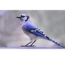 Blue Jay Day Photographic Print