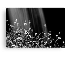 Waterfalls & Wildflowers Canvas Print