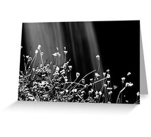 Waterfalls & Wildflowers Greeting Card