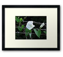Bouquet on barbed wire Framed Print
