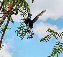Tasty berries - image 2 of series 1 by missmoneypenny