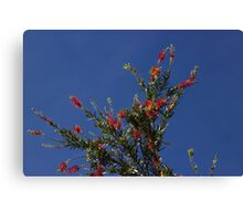 Baby Bottle Brush Tree Canvas Print