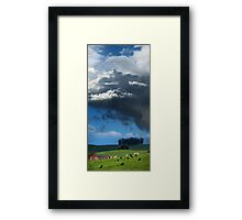 Happy Cows Grazing Framed Print