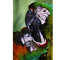 Kissing Macaw Parrots Photographic Print