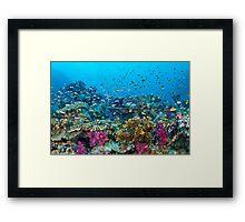 Fantasea Reef Framed Print