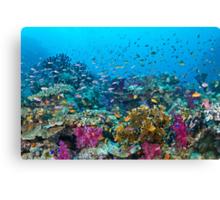 Fantasea Reef Canvas Print