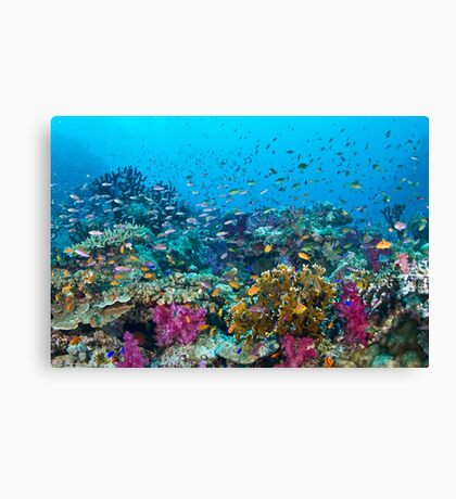 Fantasea Reef Canvas Print