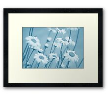 Daisies in Blue #2 Framed Print