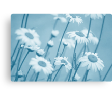 Daisies in Blue #2 Canvas Print