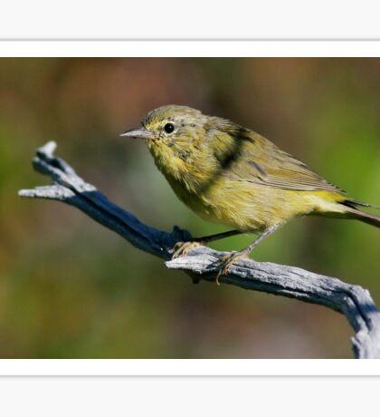 Orange-crowned Warbler Sticker
