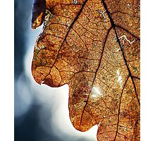 Light thorugh Leaf Photographic Print