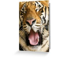717 panthera Tigris Greeting Card
