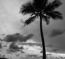 Palm tree silhouette in black and white by Stanciuc