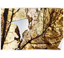 A broken Autumn leaf Poster