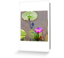 Purple water lily and lotus leaves on water Greeting Card