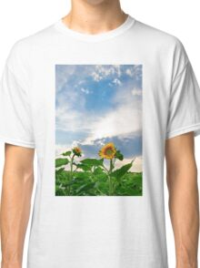 View of field with blooming sunflowers with sunset in background Classic T-Shirt