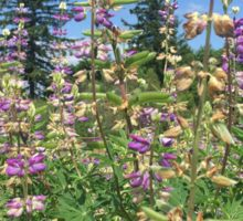 Purple Flowers of the Pacific Northwest Oregon Sticker