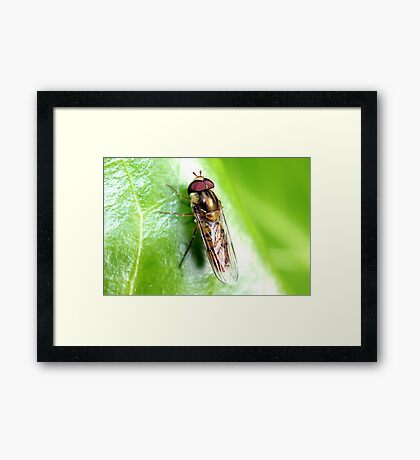 Hedgerow Insect Framed Print